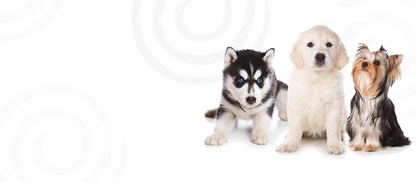 dogsd and puppies for sale